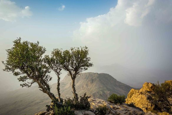 Gorakh_hill_lonely_tree.JPG